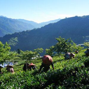 Тайваньский фермерский десант. Продолжение
